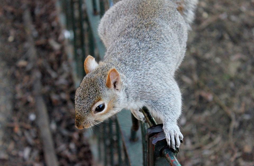 squirrel-111258_960_720