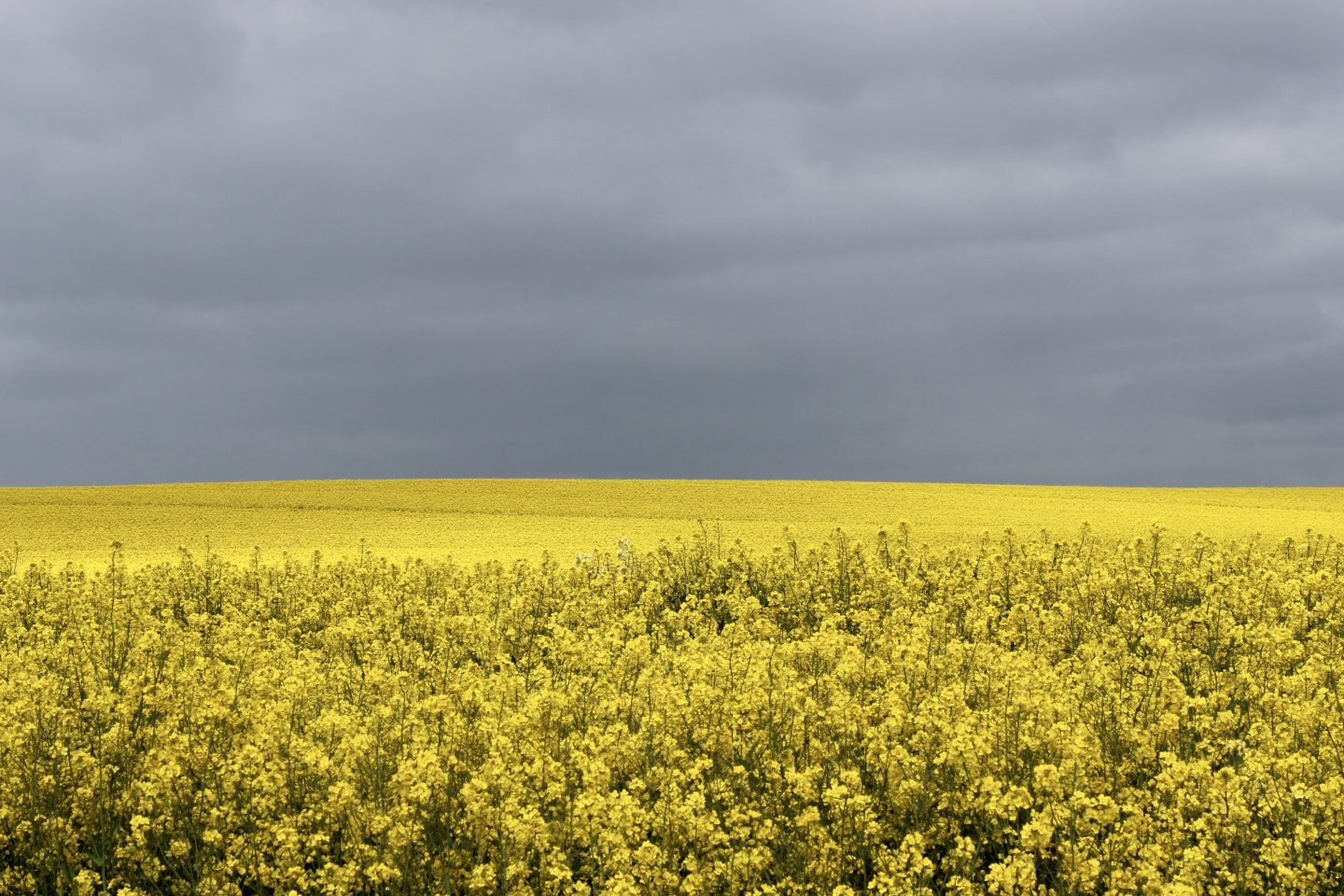 Grey Skies and Fields of Gold
