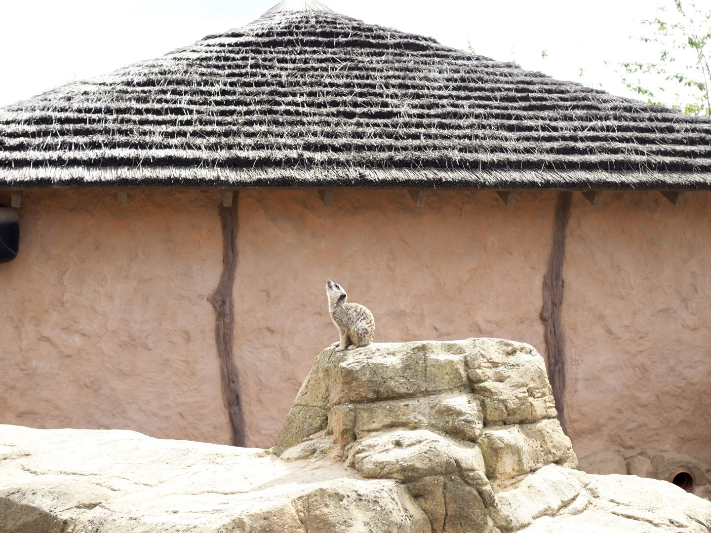 YORKSHIRE WILDLIFE PARK | REVIEW